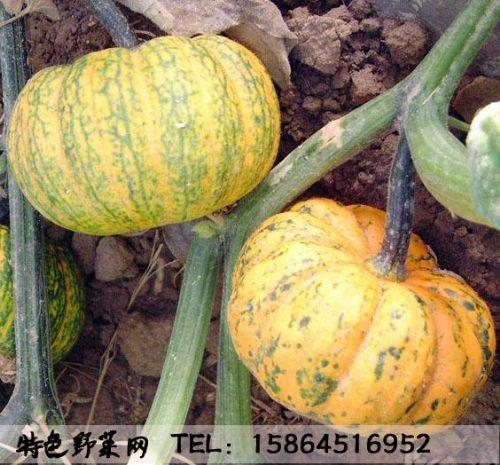 南瓜雕刻寿星的图片