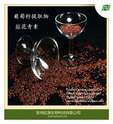 factory supply 98% organic grape seed extract