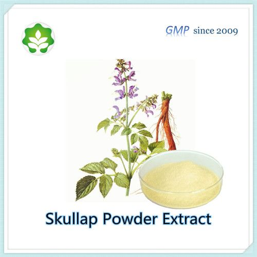 Scutellaria Baicalensis Extract Baicalin Powder