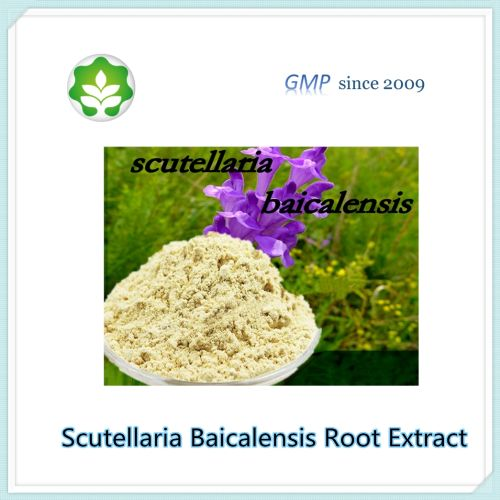 Chinese baical skullcap herbal extract powder for