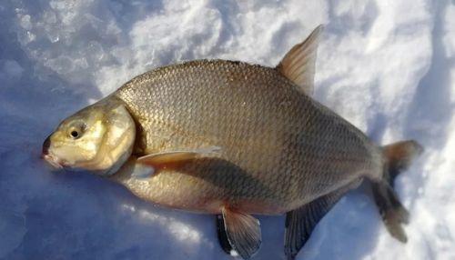 东北法罗鱼产地批发,黑龙江鳊花鱼货源价格,冷冻鳊花
