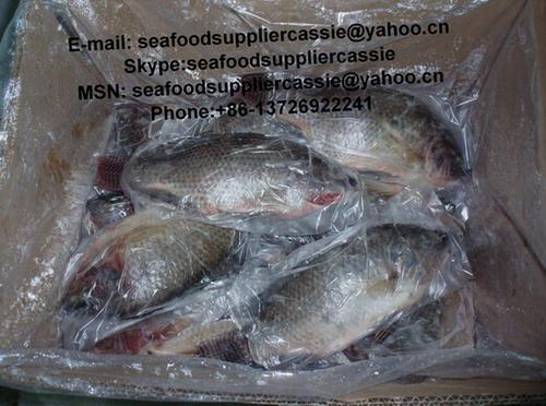02黑罗非鱼全条 价格:0元/吨