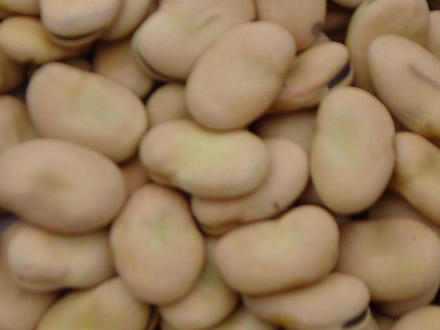 蚕豆最新批发价 价格:3600元/吨