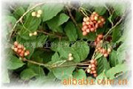 Huirui Biological Schisandra Chinensis extract