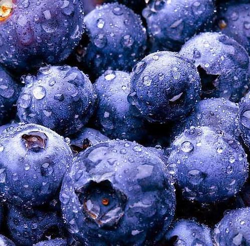 Cranberry (Bilberry) Extract£¨daisy@nutra-max.com£©