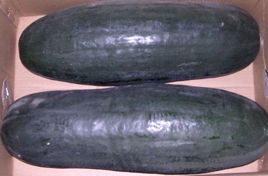 黑皮冬瓜种子图片