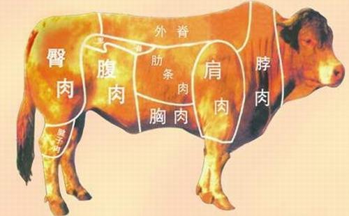 牛创意 手绘